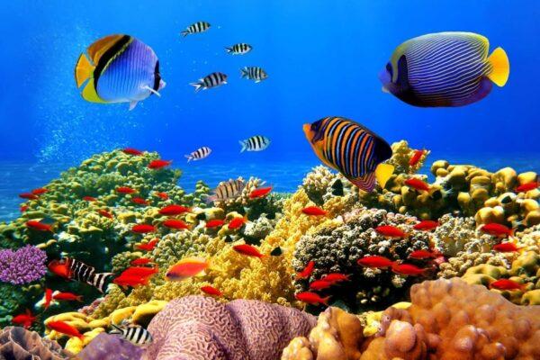 آسمان مجازی اقیانوس 2x3-65