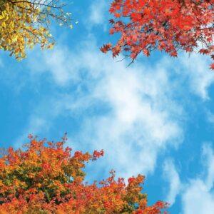 آسمان مجازی درختان پاییزی 2x2-5