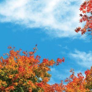 آسمان مجازی درختان پاییزی 2x4-2