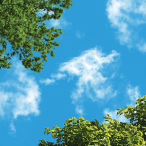 آسمان مجازی درخت سبز 3x3-28