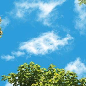 آسمان مجازی درخت میوه 2x4-8