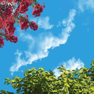آسمان مجازی درخت و شکوفه 2x2-13