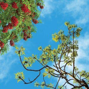 آسمان مجازی درخت و میوه 2x2-9