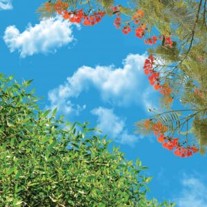 آسمان مجازی درخت و گل 2x2-12
