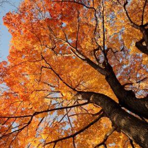 آسمان مجازی درخت پاییزی 2x3-34