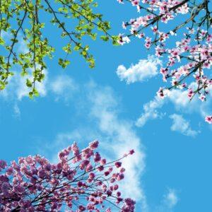 آسمان مجازی شکوفه بهاری 2x2-