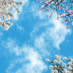 آسمان مجازی شکوفه سفید 3x3-18