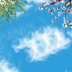 آسمان مجازی شکوفه و برگ 2x3-1