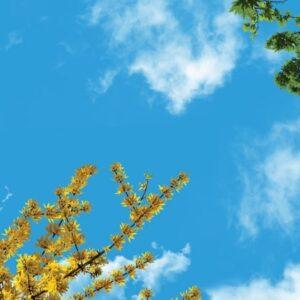 آسمان مجازی شکوفه و برگ 2x4-25