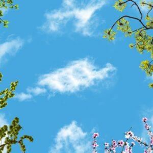 آسمان مجازی شکوفه و برگ 3x5-6