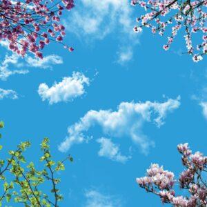 آسمان مجازی شکوفه 3x4-1