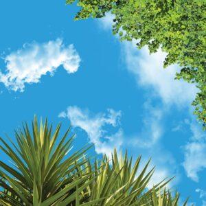آسمان مجازی نخل و درخت 2x2-6