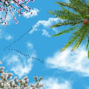 آسمان مجازی نخل و پرنده 3x4-26