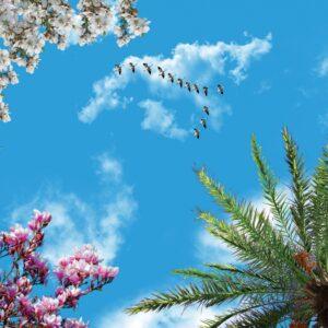 آسمان مجازی پرنده و شکوفه 3x4-25
