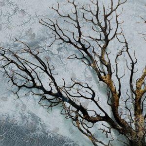 پوستر درخت پرشاخه خشکیده روی زمینه ابر و باد آبی